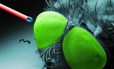 Mini-Objektiv aus dem 3D-Drucker auf einer optischen Faser neben einer Fliege (Bild: Universität Stuttgart)
